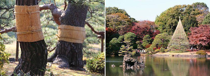 """""""Trang phục mùa đông"""" của các loại cây cảnh ở Nhật"""