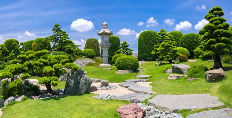 Vạn Niên Tùng - Loại Cây Đặc Trưng Của Vườn Nhật