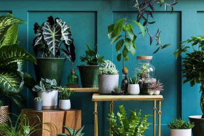 Top 10 loại cây nên trồng trong nhà không cần ánh sáng, đẹp và cực kỳ tốt