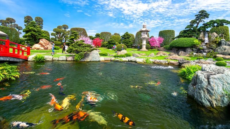 Mẫu hồ cá koi tuyệt đẹp ở công viên đá Nhật Bản