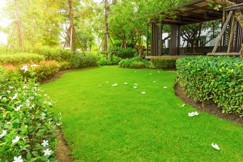 Cỏ nhung Nhật nhưng giống cỏ này lại có xuất xứ từ Trung Quốc