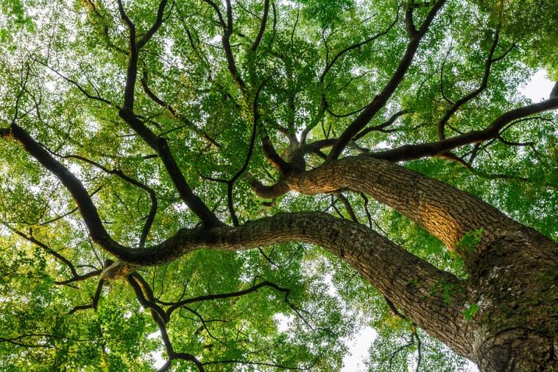 Long não còn có tên gọi khác là Dã Hương, tinh dầu trong lá và thân có tính dược liệu cao