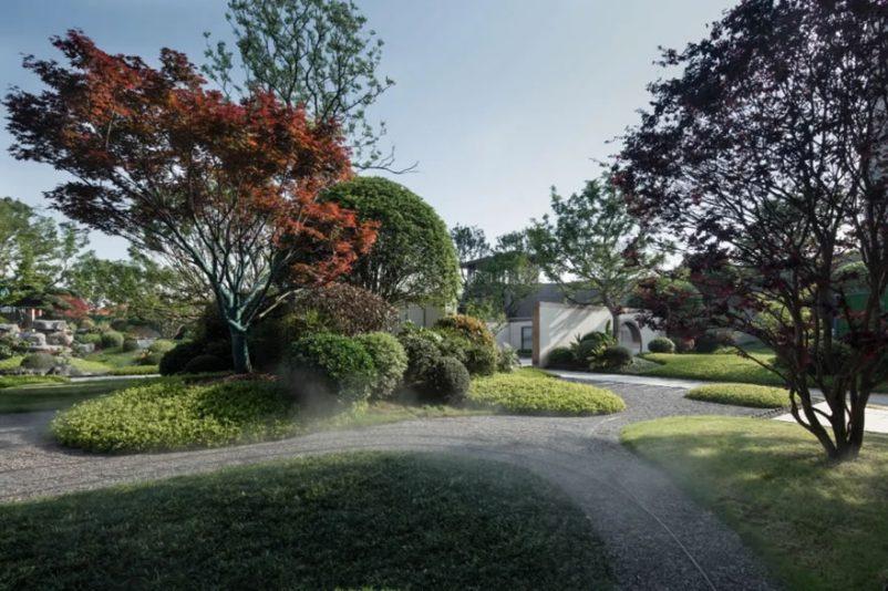 Sân vườn đẹp không thể thiếu các loại cây bóng mát đẹp
