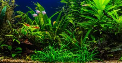 Các loại cây thủy sinh dễ trồng và chăm sóc cho người mới chơi